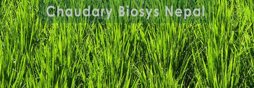 Chaudhary Biosys (Nepal) Pvt. Ltd - Ayurvedic and Herbal - NepalB2B