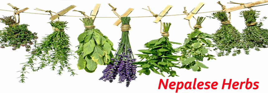 Essence Nepal - Ayurvedic and Herbal - NepalB2B