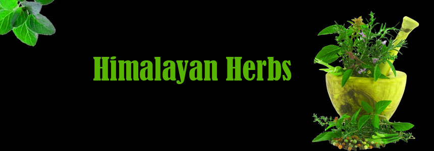 Himalayan Herbs Traders Pvt. Ltd. - Agriculture and Animal Products - Ayurvedic and Herbal - NepalB2B