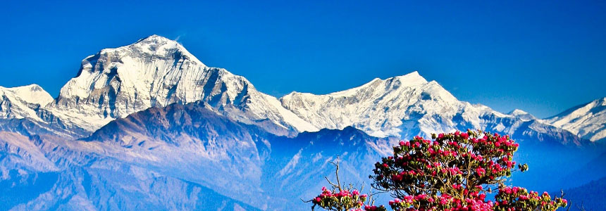 Tourist Link Trek & Expedition Pvt. Ltd. - Travel and Trekking - NepalB2B