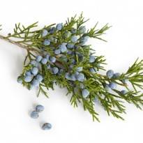 Juniper berry oil - Ayurvedic and Herbal - NepalB2B