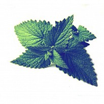Mentha Oil - Ayurvedic and Herbal - NepalB2B