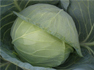 Moon Cabbage - Agriculture and Animal Products - NepalB2B
