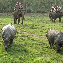 Jungle safari in nepal - Travel and Trekking - NepalB2B