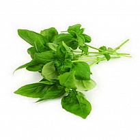 Holy Basil - Ayurvedic and Herbal - NepalB2B