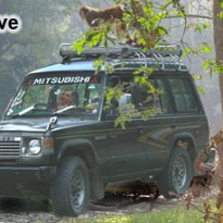 Jungle Drive - Travel and Trekking - NepalB2B
