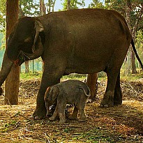 Elephant briding Center - Travel and Trekking - NepalB2B