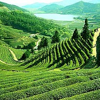 Tea Garden Tour - Travel and Trekking - NepalB2B