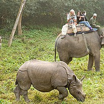Jungle Safari - Travel and Trekking - NepalB2B